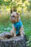 在树桩的狗在公园 免版税库存照片