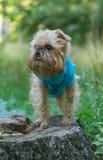 在树桩的狗在公园 免版税库存图片