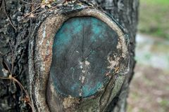在树桩的绿色油漆 免版税库存图片