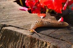 在树桩的蜗牛在庭院里在一个晴天 免版税库存图片
