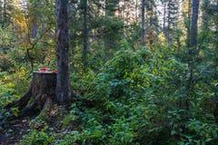 在树桩的西瓜 免版税图库摄影