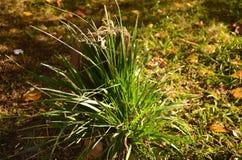 在树桩背景的绿草 免版税图库摄影