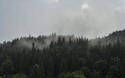 在树梢的雾 库存照片