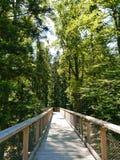 在树梢的Wodden footwalk在巴德维尔德巴德,黑森林 免版税库存图片