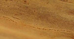 在树特写镜头的蚂蚁 股票视频