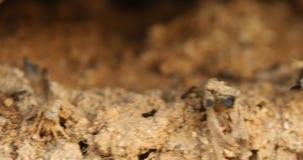 在树特写镜头的蚂蚁 影视素材