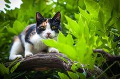 在树狩猎的猫 免版税库存照片