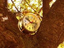 在树的一个时钟 图库摄影
