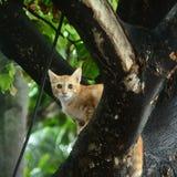 在树的一只小的猫 免版税库存照片