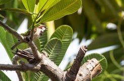 在树的一只小鸟 免版税库存图片