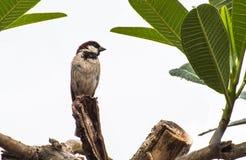 在树的一只小鸟 图库摄影