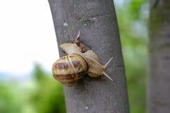 在树的一只巨大的蜗牛 免版税库存图片