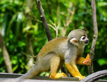在树的一只猴子在动物园里 免版税图库摄影