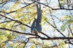 在树的一只蓝色和黄色金刚鹦鹉 免版税图库摄影
