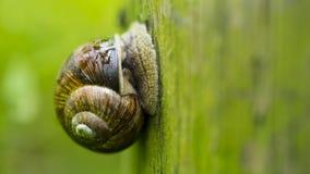 在树的一只蜗牛 免版税库存照片