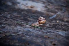 在树的一只蜗牛 免版税图库摄影