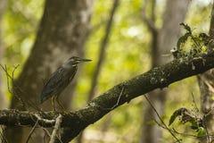 在树的一只鸟 免版税库存照片