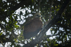 在树的一只鸟 免版税库存图片
