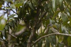 在树的一只鸟 免版税图库摄影