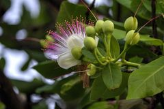 在树的一束美丽的白花 库存图片