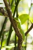 在树的一条buttertfly毛虫 库存照片