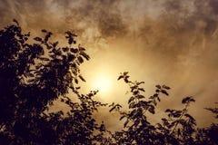 在树的上面的黑剪影,与黄色太阳的天空 免版税图库摄影