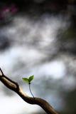 在树的两片偏僻的叶子 免版税库存照片