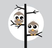 在树的两头棕色猫头鹰猫头鹰 图库摄影