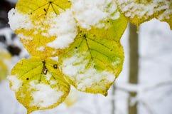 在树的为时叶子 免版税库存照片