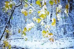 在树的为时叶子 图库摄影