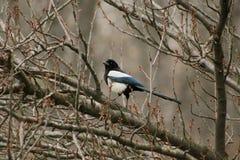 在树的乌鸦 库存照片