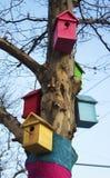 在树的五个逗人喜爱的五颜六色的鸟舍 免版税库存图片
