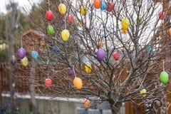 在树的五颜六色的复活节彩蛋 图库摄影