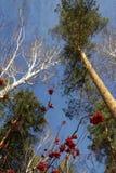 在树的令人惊讶的图画 库存图片