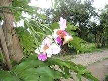 在树的兰花 库存图片