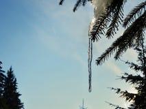 在树的冰柱 免版税库存图片