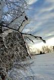 在树的冰 免版税库存图片