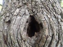 在树的凹陷 库存照片