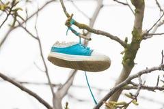 在树的分支垂悬了一双鞋子 免版税图库摄影