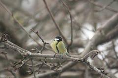 在树的分支的一只鸟 免版税库存照片