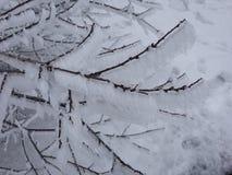 在树的分支的冰 免版税库存照片
