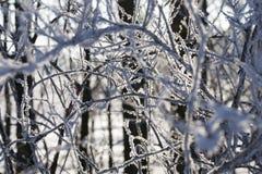 在树的分支的树冰 免版税库存照片