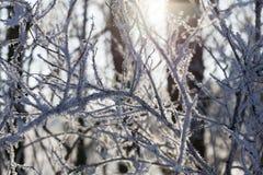 在树的分支的树冰 免版税库存图片