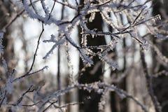 在树的分支的树冰 库存图片
