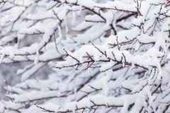 在树的分支的雪 图库摄影