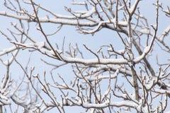 在树的分支的雪 免版税库存照片