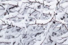 在树的分支的雪 免版税库存图片