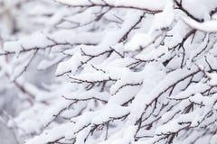在树的分支的雪 库存图片