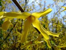 在树的分支的黄色花 图库摄影