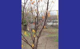 在树的前事假 库存图片